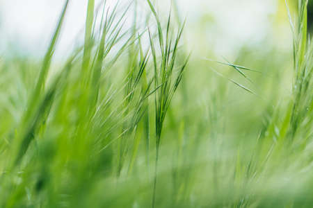 close up of green and fresh grass