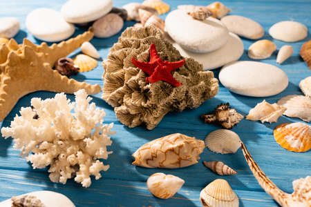 red starfish, coral and seashells on wooden blue background