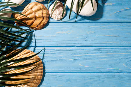 top view of seashells and palm leaves on wooden blue background