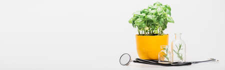 panoramic shot of green plant in flowerpot near herbs in glass bottles and stethoscope on white background, naturopathy concept