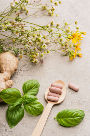 herb, green leaves, ginger root and pills in wooden spoon on concrete background, naturopathy concept Stock Photo