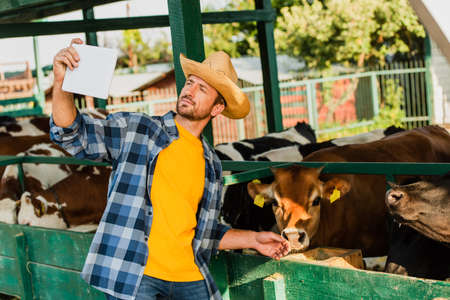 farmer in plaid shirt and straw hat taking selfie with cows on digital tablet