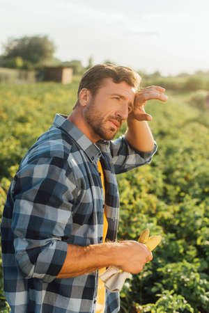 tired farmer in plaid shirt touching forehead and looking away while standing in field Foto de archivo