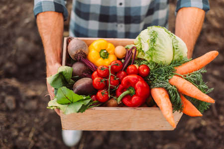 high angle view of farmer holding wooden box with fresh, ripe vegetables