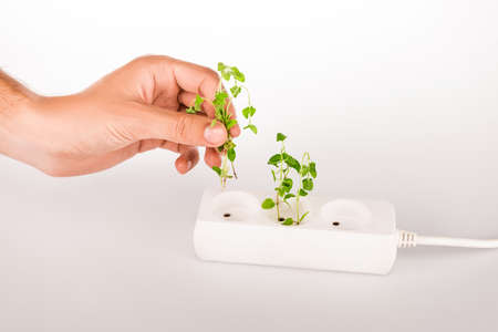 cropped view of man holding green plant near socket in power extender on white background