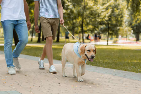 cropped view of father and teenager son walking with golden retriever on asphalt