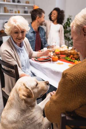 selective focus of golden retriever near senior man celebrating thanksgiving day with multiethnic family