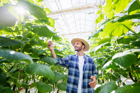 joyful farmer taking photo of cucumber plants in greenhouse Banque d'images
