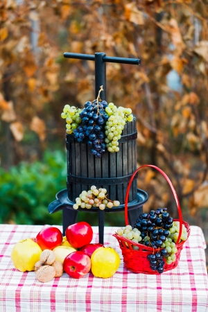 juice squeezer: Grape juice squeezer on a rustic table decorated with autumn fruits.