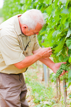 horticultural: Horticultural examination process in the fields.