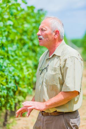 horticultural: Elderly horticultural engeneer talking against grapevines. Stock Photo