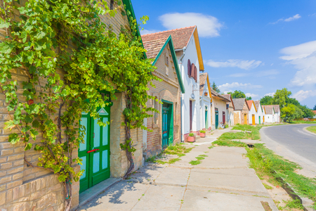 vine: A street from Villany, Baranya county, Hungary full with wine cellars, wine yards and wierys.