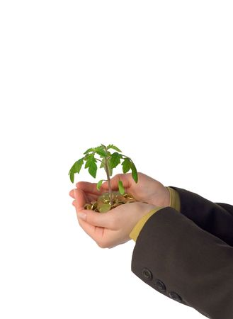 fostering: Emerging business or idea for a new business - concept for innovation (isolated) Stock Photo