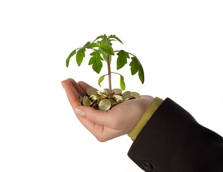 fostering: New plant sprouting from a handful of golden coins, isolated - concept for business, innovation, growth and money