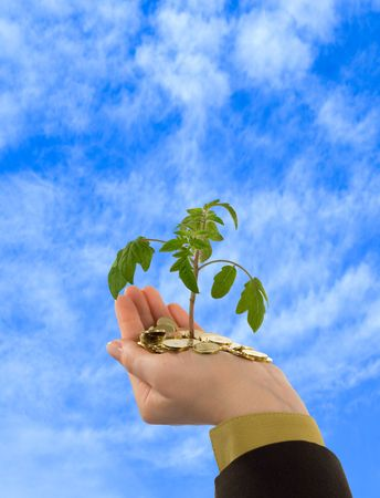 foresee: Looking up towards the skies to a young plant sprouting from a handful of golden coins Stock Photo