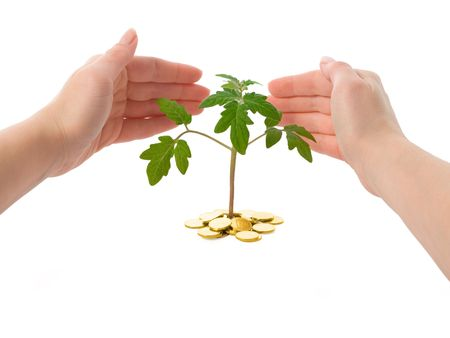 Hands protecting a plant (isolated) - concept for new business Stock Photo - 853793