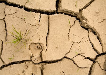 survives: Cracked dry earth with animal footprint and sprouting struggling young vegetation - global warming concept