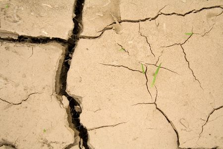 survives: Young sprouting vegetation determined to survive - global warming concept
