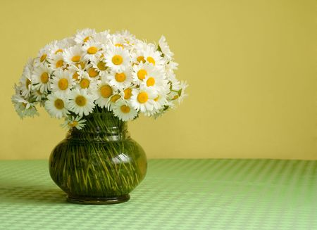 Rich daisy bouquet in a glass vase on the table in front of a yellow wall - pastel colors - lots of copy space