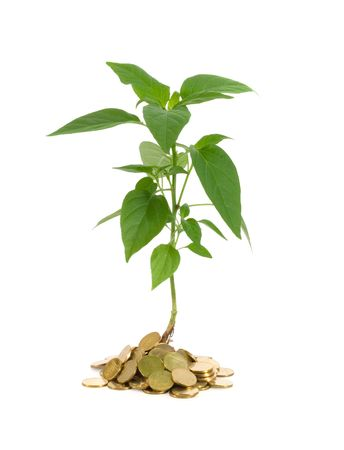 vigorously: Plant vigorously sprouting from a pile of golden coins - concept for good investments