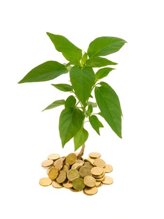 Plant rising from a pile of golden coins - conceptual image for profit, investments, success and finances - isolated Stock Photo