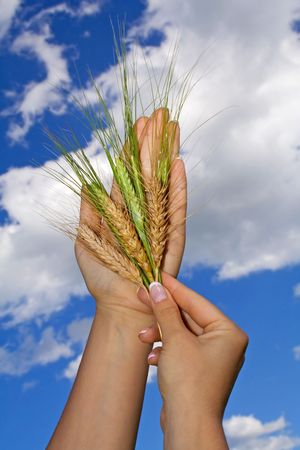 Woman holding wheat crop agains bright blue sky - concept for hope and wealth photo