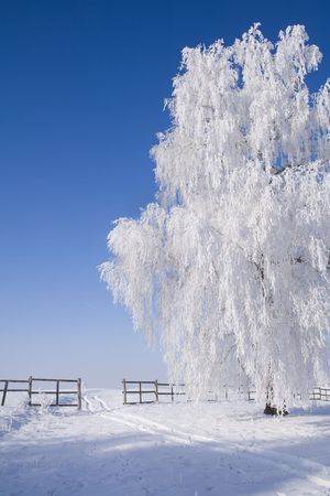 Frosty tree by the snow covered path in the bright sunny winter scenery