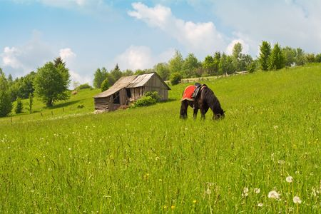 Serene scene with a horse grazing near a wooden shack on a peaceful mountain pasture photo