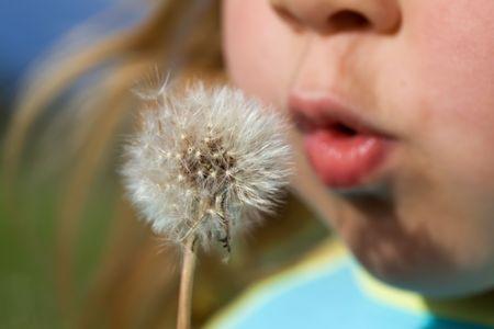 blowing dandelion: Bambina che soffia semi di dente di leone - closeup, profondit� di campo