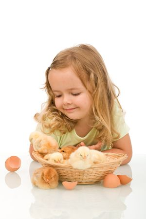 Little girl looking at a basket full of newborn chickens - isolated photo