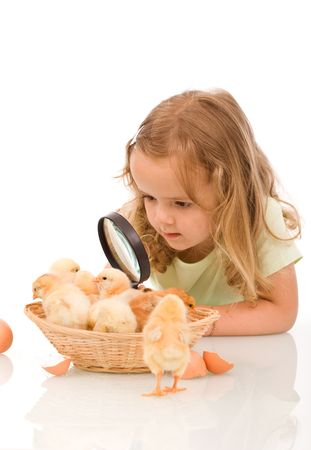 Little girl studying a basketful of chicks with a large magnifier - isolated photo