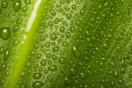 Water drops on green leaf texture - nature background photo