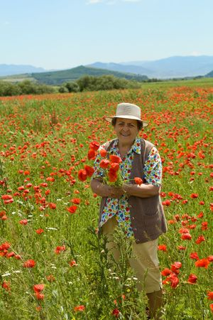 admiring: Senior woman picking flowers enjoying the summer sunshine on a poppy field