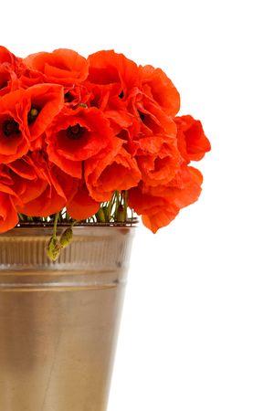 Red poppy flowers in metallic bucket - closeup, isolated photo