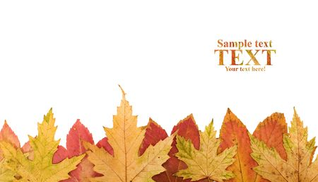 Autumn leaves footer design element - isolated photo