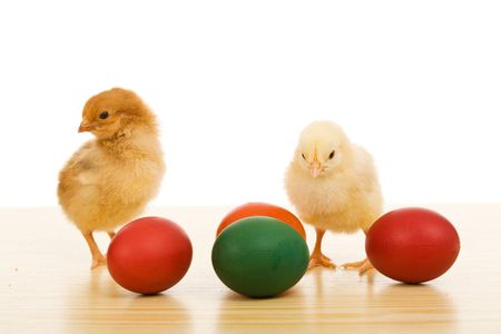 Easter chickens on the table with dyed eggs - isolated photo
