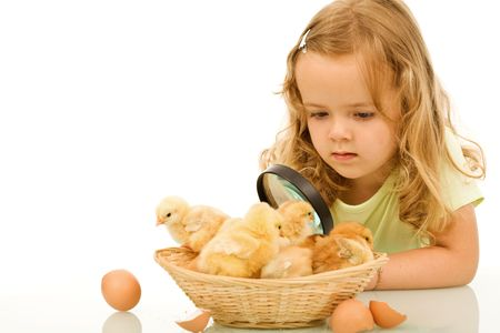 Little girl studying her easter newborn chickens with a large lens - isolated with reflection photo