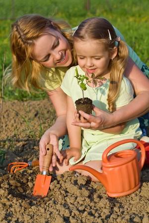 madre tierra: Mujer y ni�a cultivo de alimentos saludables - siembra de las plantas de semillero de tomate