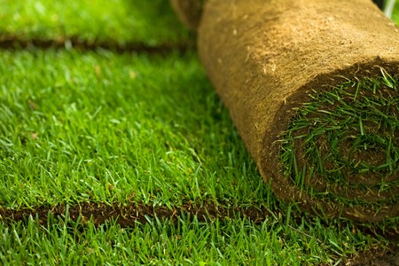 Green turf grass roll and background - closeup photo