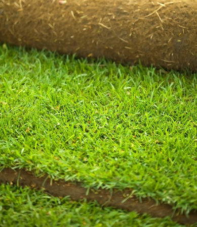 Turf grass roll partially unrolled - closeup, shallow depth of field Stock Photo - 8437820