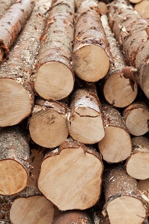 Pile of logs - natural resources management photo