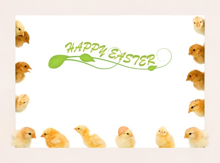 Lots of baby chicken in different positions on a frame - copyspace Stock Photo - 12798895