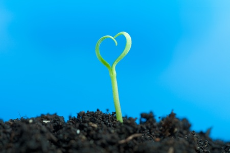Close-up on young spring seedling growing out of soil - against blue photo