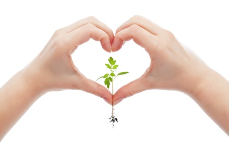 Love and protect nature and life concept with woman hand holding young seedling photo