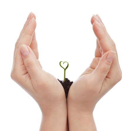 Love and protect nature concept - woman hand shielding heart shaped seedling photo