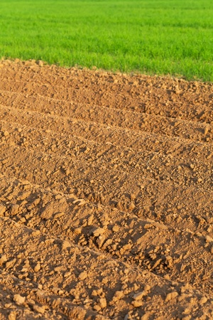 furrows: Furrows in spring with sprouting wheat in background