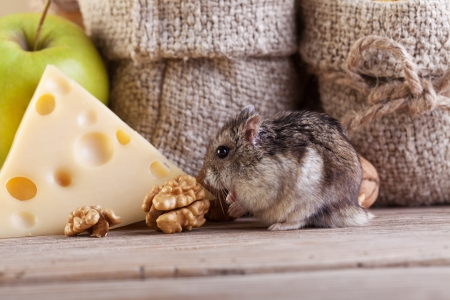munching: Hamster got into the pantry -  munching on goods
