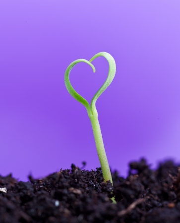 Spring seedling in shape of a heart - love nature photo