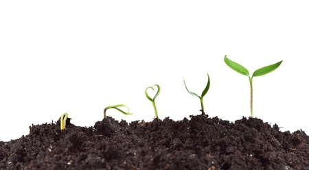 Plant germination and growth - love for nature concept with heart shaped seedling