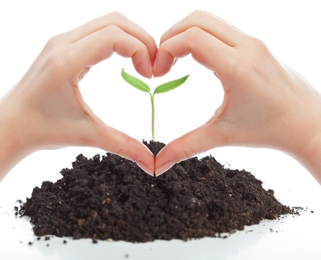 Love for nature concept with seedling and woman hands photo